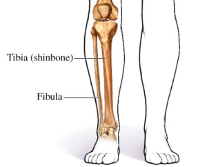 diagram-tibia-fibula